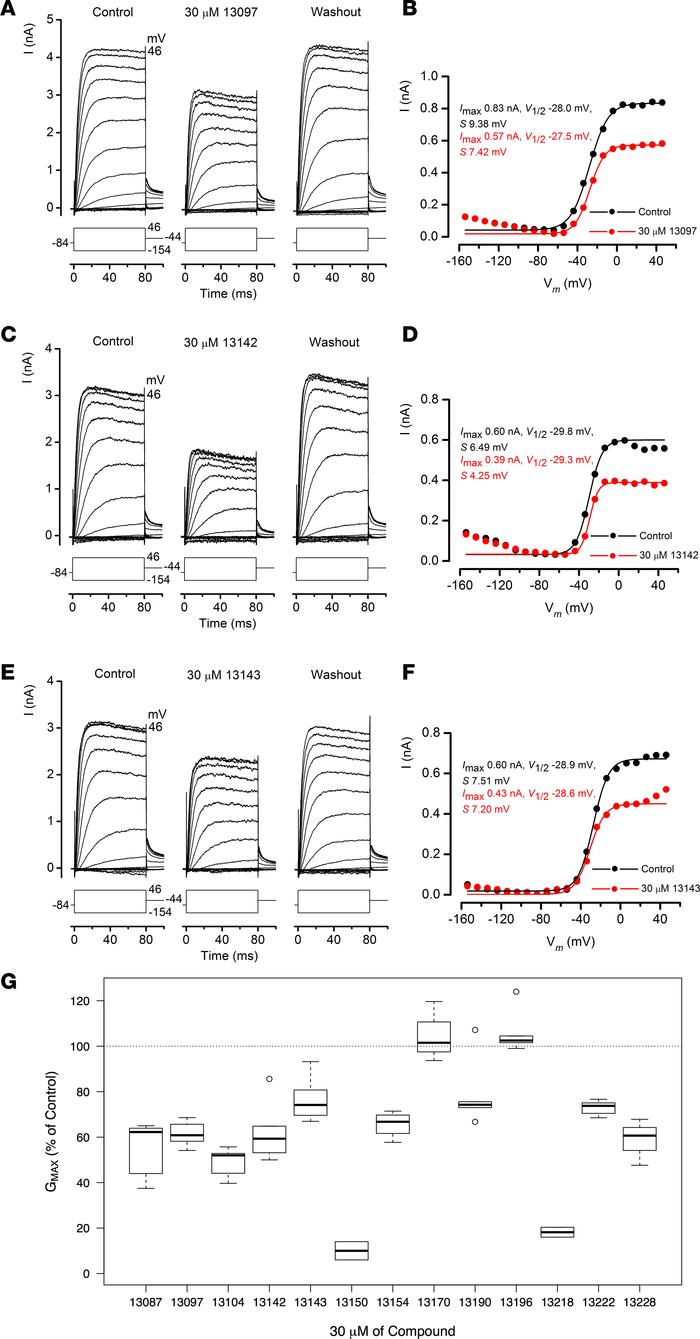 Interactions of otoprotectants with the basolateral potassium current IK...