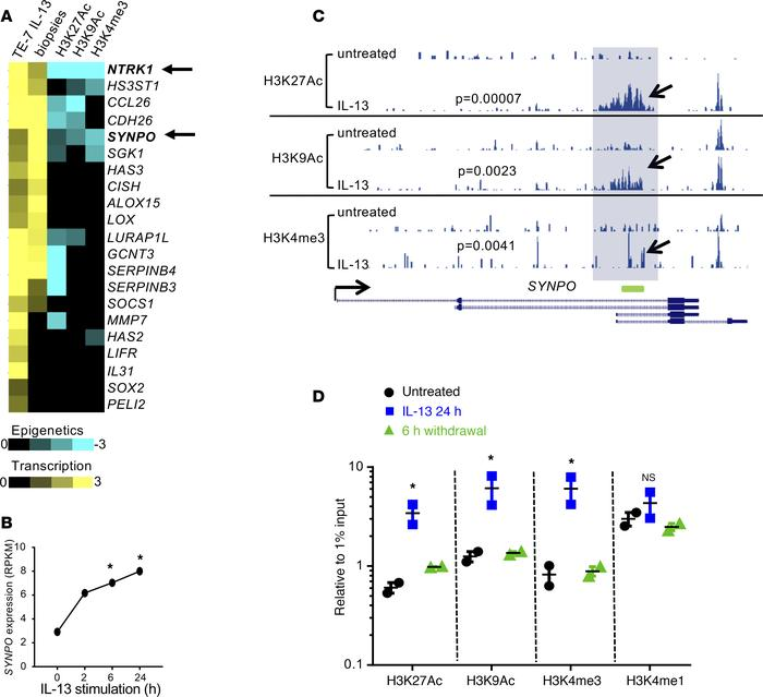 Transcriptional and epigenetic regulation of SYNPO in TE-7 cells. (A) Th...