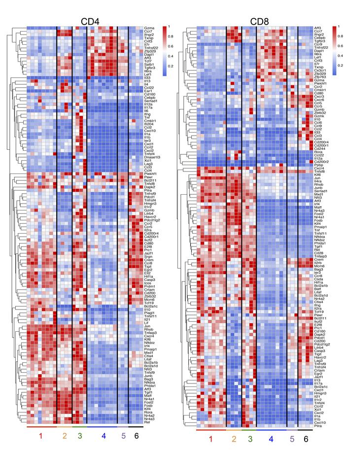 Heatmaps for differential gene expression. Heatmaps for differential gen...