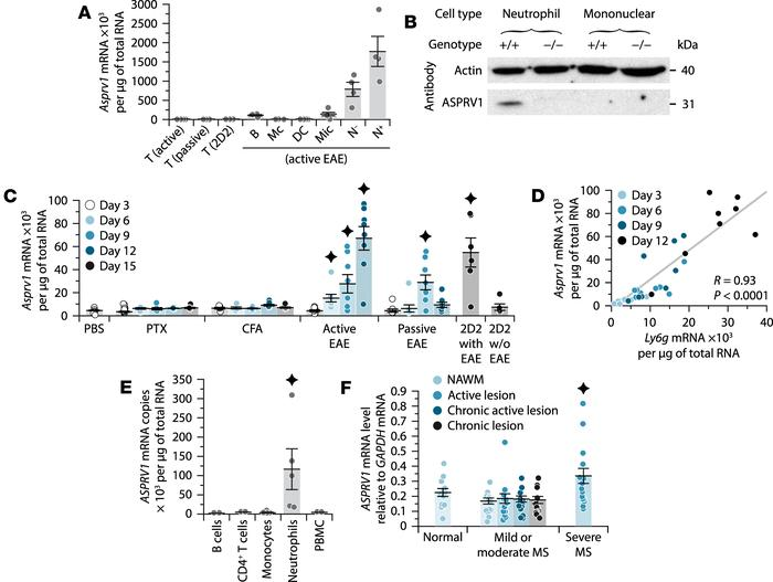 ASPRV1 is a neutrophil-specific marker increased in the CNS during EAE a...