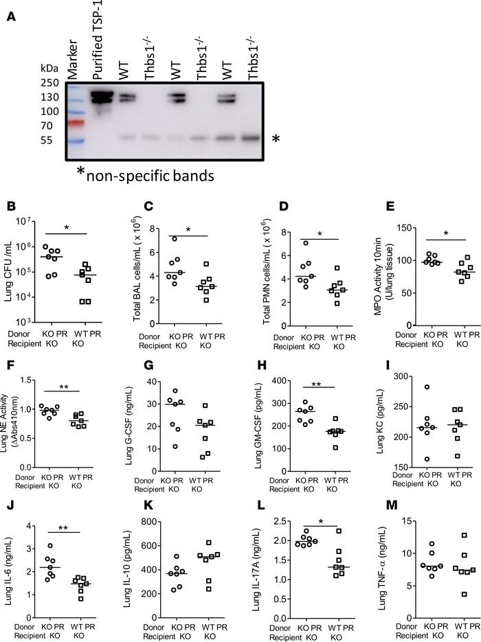 Administration of WT PRs enriched in TSP-1 to Thbs1–/– mice after Pseudo...