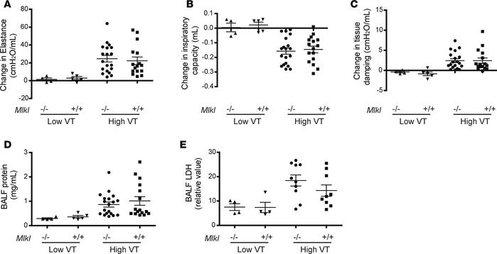 Role of MLKL in ventilator-induced lung injury in mice. Mlkl–/– and Mlkl...