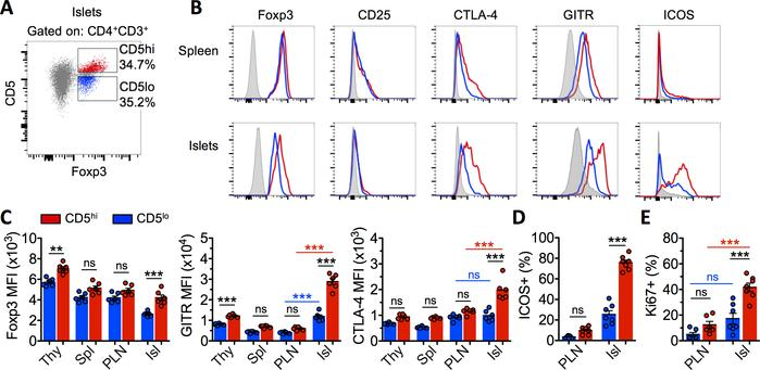 CD5hi Tregs constitute a functionally distinct subset. Analysis of 10- t...