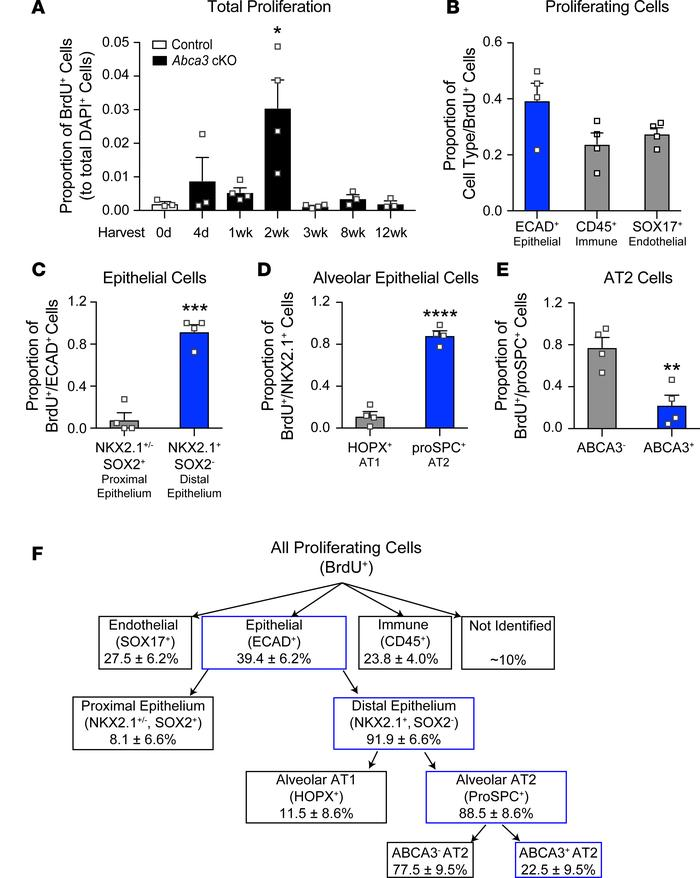 Proliferation of alveolar cells following partial deletion of Abca3. (A)...