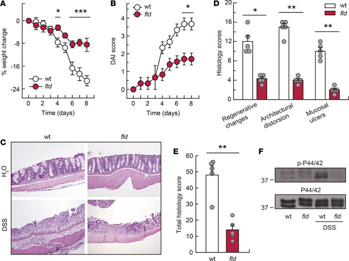 Lipin-1–deficient animals are protected against DSS-induced colitis. WT ...