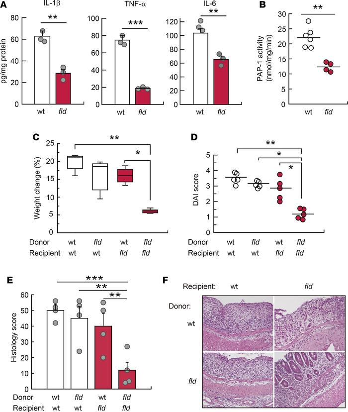 Lipin-1 expression level in macrophages determines colitis severity. (A ...