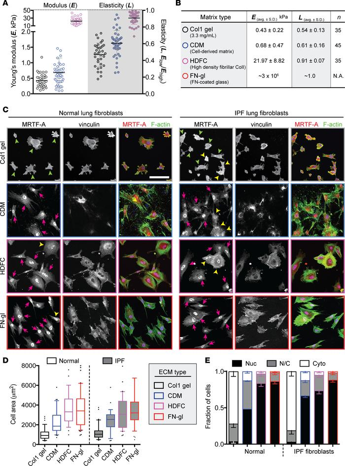 Fibroblast activation is modulated by extracellular matrix type, modulus...