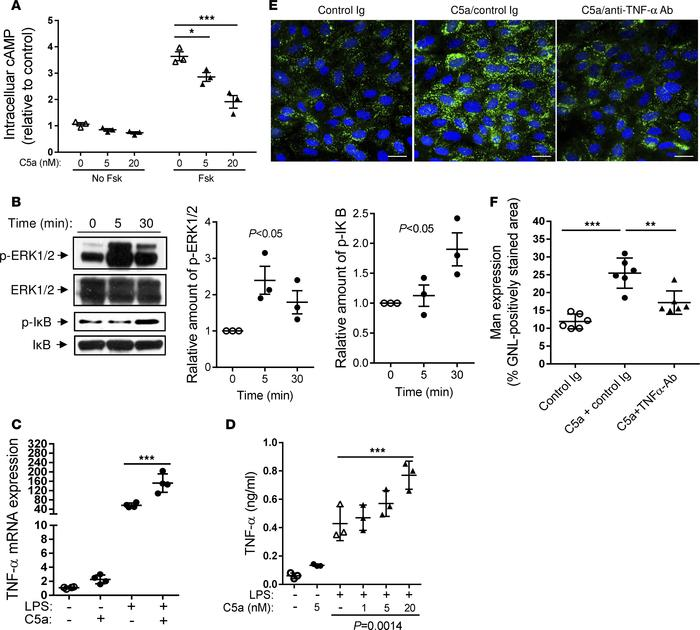 Effects of C5a on intracellular signalling, proinflammatory cytokine pro...