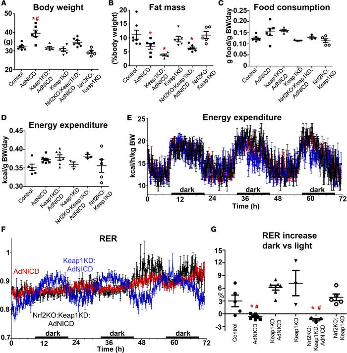 Activation of the Nrf2 pathway prevents energy metabolism disturbance in...