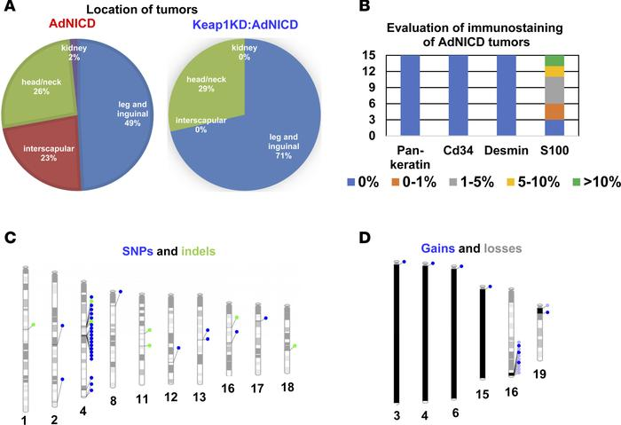 NICD-driven soft-tissue sarcomas show the pathology signature of liposar...