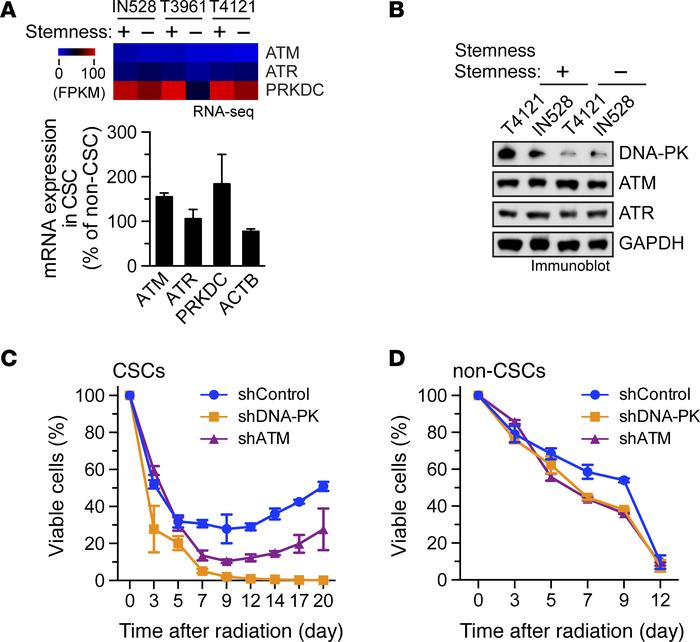 DNA-PK is preferentially expressed in CSCs and is critical for after rad...