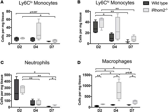 Immune responses in iRhom2-mutant adult mouse hearts after myocardial in...