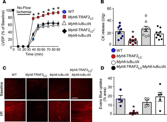 Role of NF-κB signaling in TRAF2-mediated cytoprotection during I/R inju...