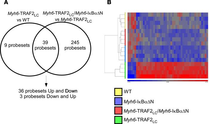 Transcriptional profiling of WT, Myh6-TRAF2LC, and Myh6-TRAF2LC/Myh6-IκB...