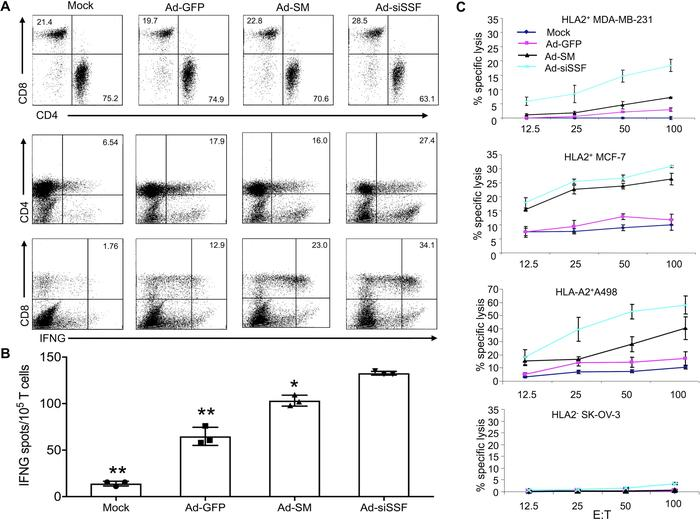 Enhanced priming of TAA-specific T cells by Ad-siSSF-DCs and enhanced TA...