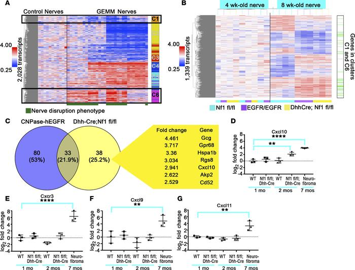 Gene expression reveals differential expression of Cxcl10 in neurofibrom...