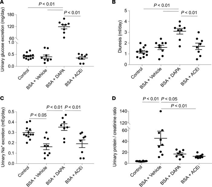 Dapagliflozin induces glycosuria and natriuresis, and limits proteinuria...