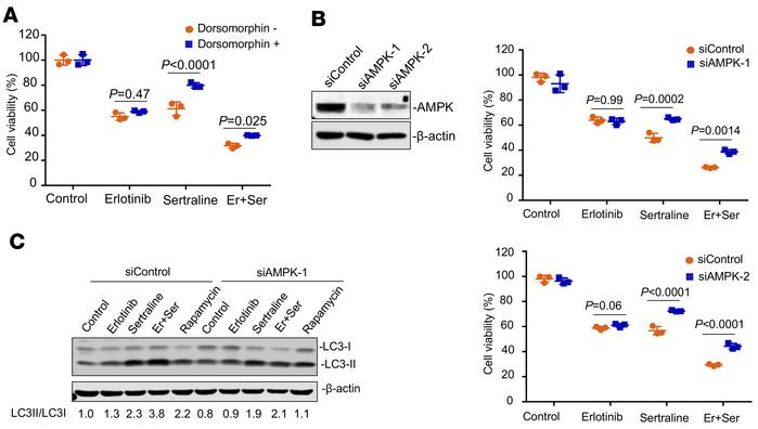 Pharmacological blockade and genetic knockdown of AMPK impaired the effe...