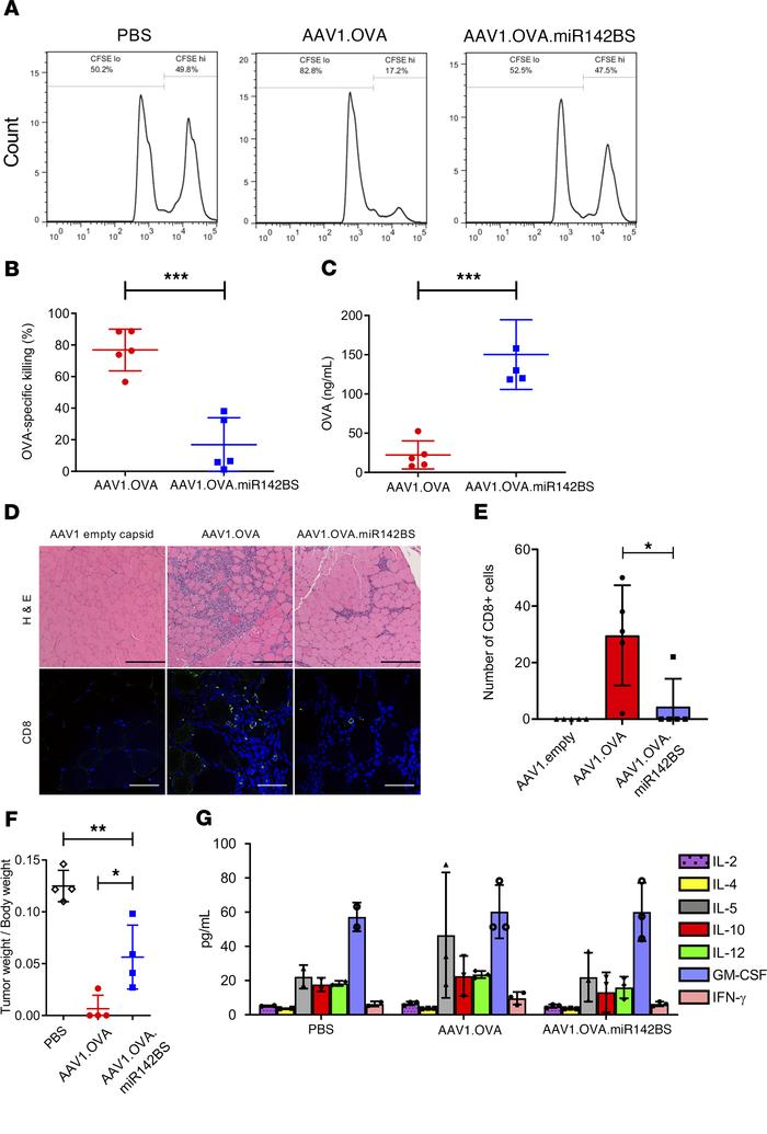 Transgene detargeting of DCs with miR142BS reduces CD8+ infiltrates and ...
