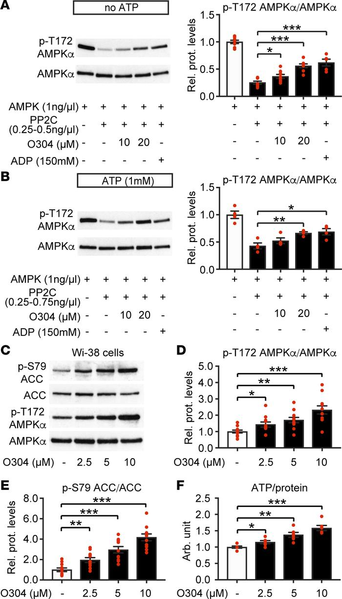 O304 increases p-T172 AMPK in vitro and increases p-T172 AMPK and ATP in...