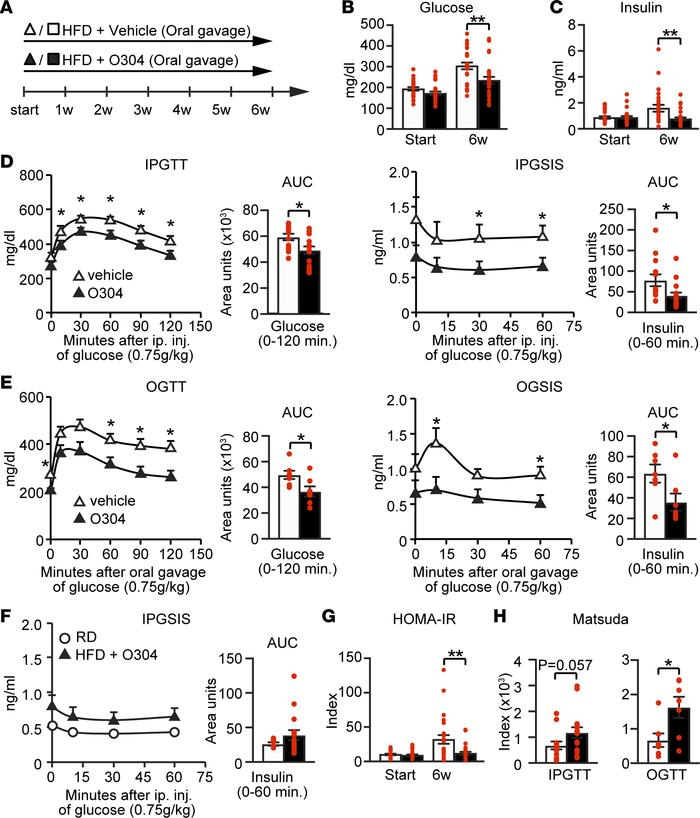 O304 prevents diabetes in hIAPPtg diet-induced obese mice. (A) Timeline ...
