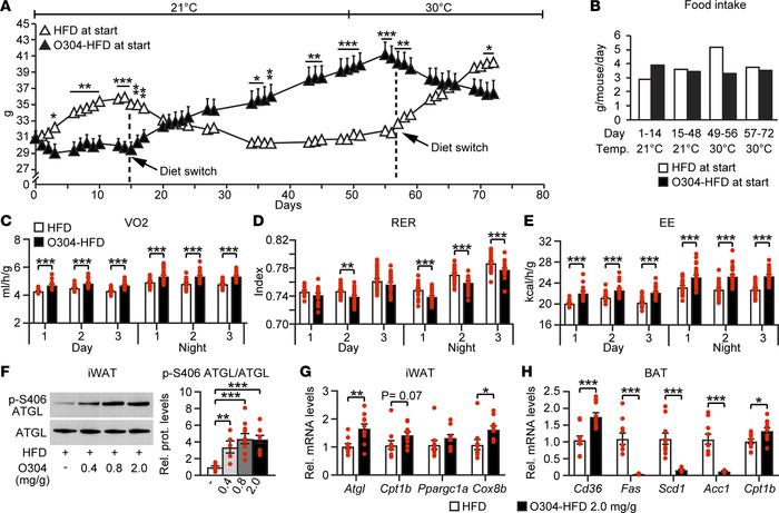 O304 reverts established obesity at thermo-neutral conditions. (A and B)...