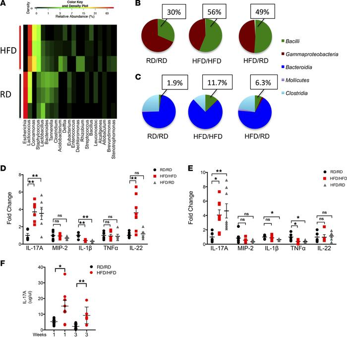 HFD offspring have an altered microbiota and increased expression and pr...