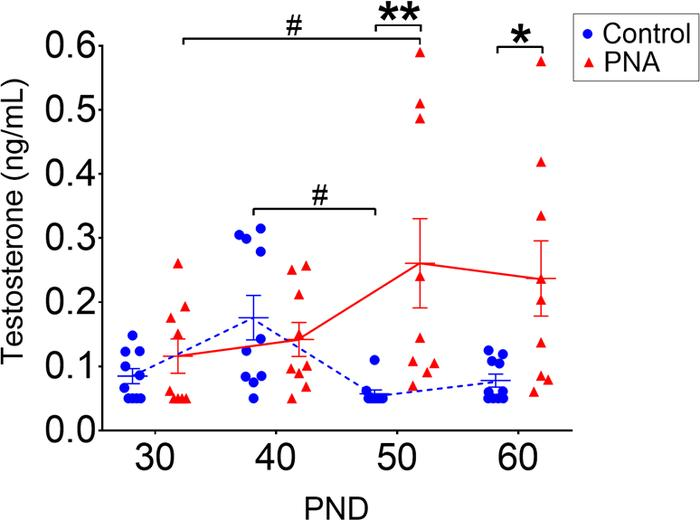 Androgen excess in PNA mice develops by PND 50. Circulating testosterone...